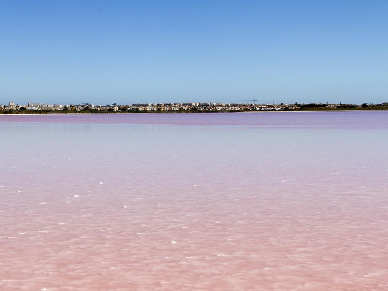 pink-lake-torrevieja
